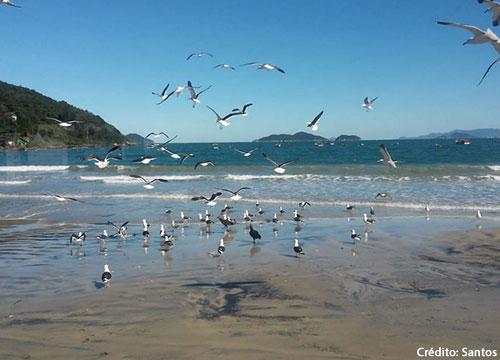 Florianópolis - Tour Sul da Ilha